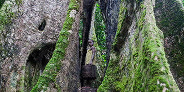 A Pygmy girl between huge trees in the rainforest. Pygmy people hunt different kinds of animals, pick fruits to eat and collect tree bark to use for medicinal purposes. This and other communities depend completely on the forests for food, clean water and medicine. Forest communities in Cameroon are under threat from companies who are planning to carve out large concession areas for logging and oil palm plantations.